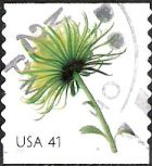 41-cent U.S. postage stamp picturing chrysanthemum